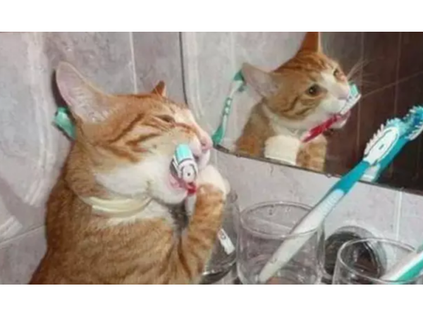从未见弄过动物刷牙,它们的牙齿都健康么?——柳州牙卫士